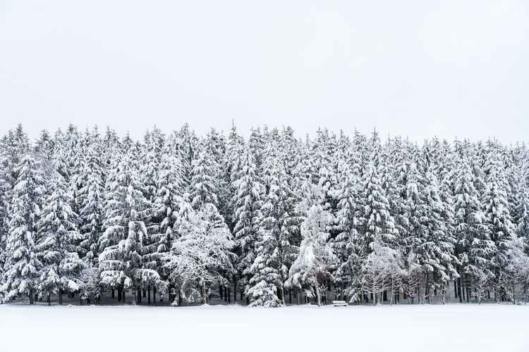Snowy pine trees with bench on a winter landscape Cold Temperature Snow Tree Plant Winter Beauty In Nature Sky Land No People Tranquil Scene Field Nature Day Tranquility Landscape Scenics - Nature Copy Space Growth Environment Outdoors Coniferous Tree
