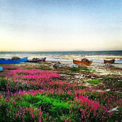 Idreamoftunisia InstagramTunisie Instagramtn InstaHamhama Hamhama HammamLif sunnyday garden or beach ? Both :p