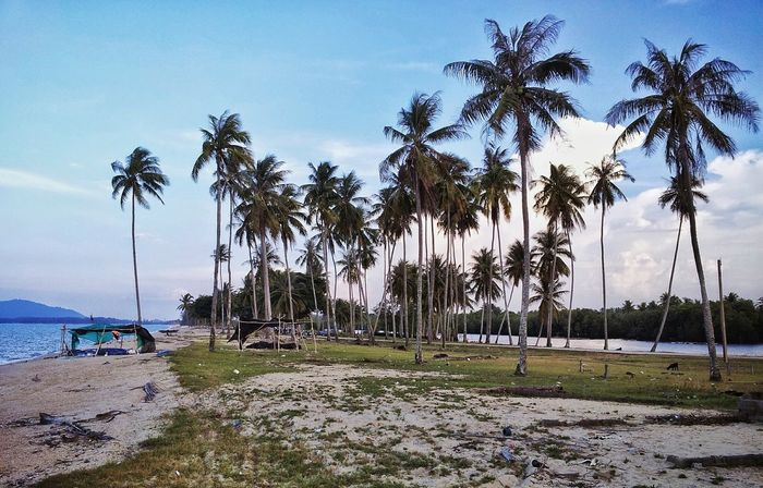 Beach Sea Tree Water Nature Travel Relaxation Landscape Beauty In Nature Outdoors Sky Phone Photography Coconut Tree