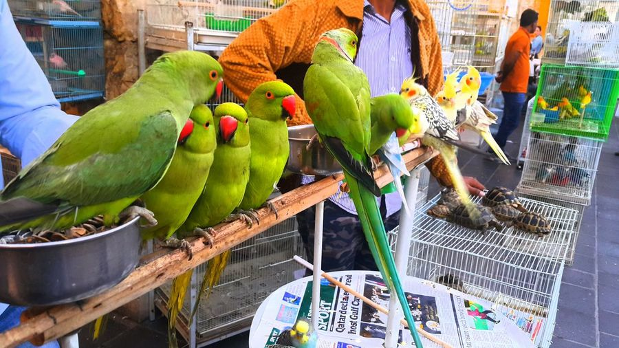 Parrots for sale Birds Exotic Birds Birds For Sale.
