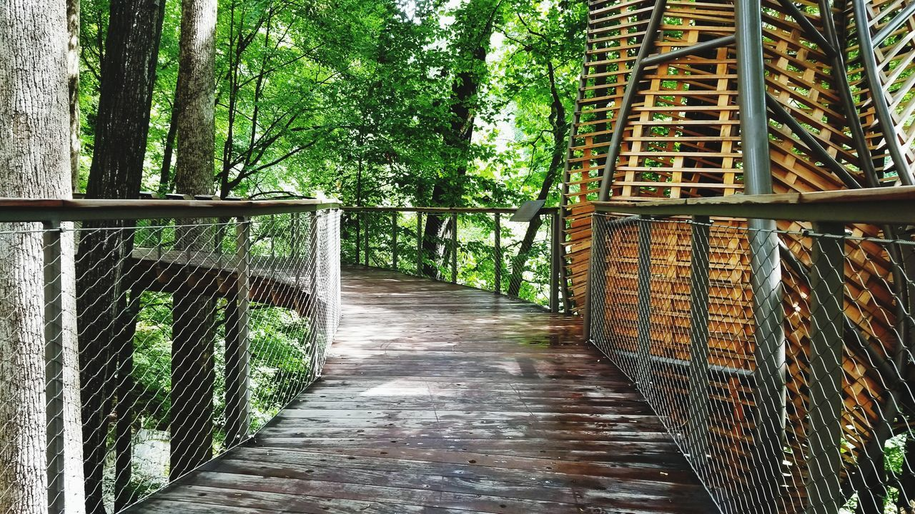 railing, tree, nature, no people, day, growth, the way forward, footbridge, outdoors, bamboo - plant, architecture, beauty in nature