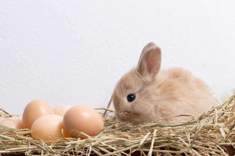 Egg Animal