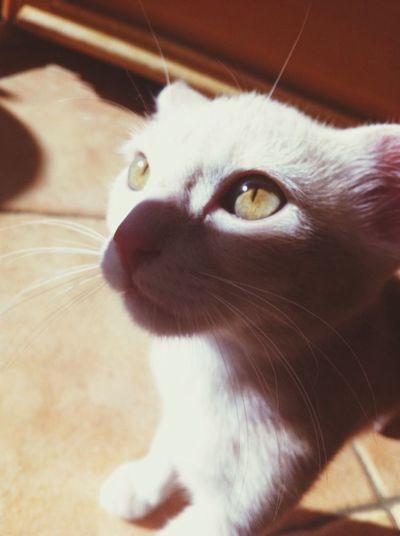 Kitty ❤️❤️ Animal Cat White Love