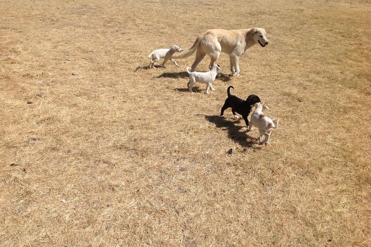 High angle view of dog family playing on field