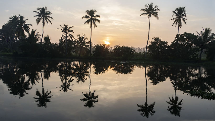 Sunrise with Palm Trees in silhouette and reflections in the Meenakshi River Sky Reflection Sunset Tropical Climate Palm Tree Tree Water Beauty In Nature Plant Scenics - Nature Tranquility Tranquil Scene Silhouette Lake Nature No People Sun Outdoors Coconut Palm Tree Swimming Pool