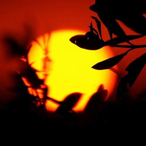 Sunset Sunset Silhouettes Sunset #sun #clouds #skylovers #sky #nature #beautifulinnature #naturalbeauty #photography #landscape First Eyeem Photo