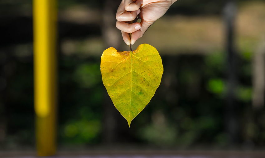 Close-up of hand holding heart shape leaf