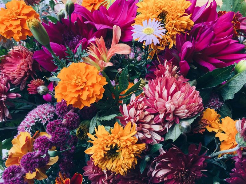 Colorful autumn 🌸🍁🍂🍃🌺 Flower Freshness Beauty In Nature Multi Colored Flower Head Nature Growth Colorful Green Nature Followme Beatiful Ukraine Kiev Like Autumn Beauty Colors Leaves Colour Of Life Purple Blossom Variation Bunch Of Flowers Yellow