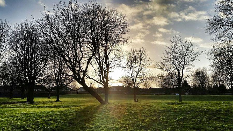 Gorton Manchester Park Trees