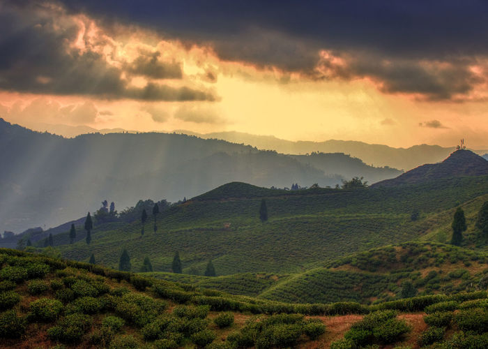 Agriculture Beauty In Nature Cloud - Sky Environment Field Green Color Growth Idyllic Land Landscape Mountain Nature No People Non-urban Scene Outdoors Plant Plantation Rural Scene Scenics - Nature Sky Tea Crop Tranquil Scene Tranquility