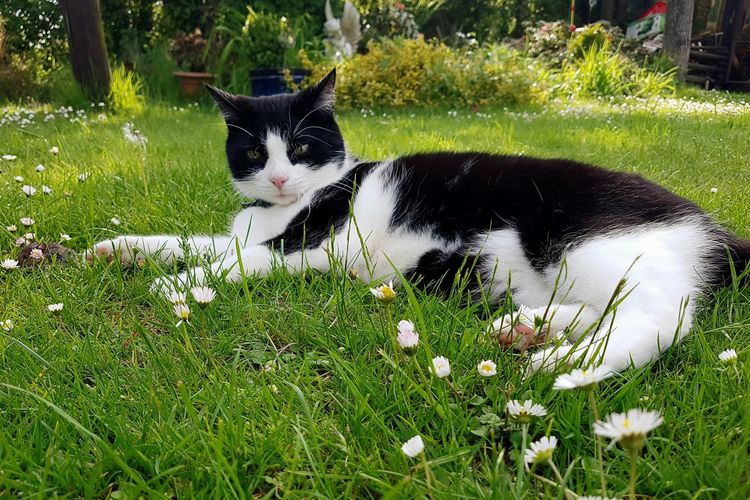 Grass Pets Domestic Cat Domestic Animals Animal Themes One Animal Feline Mammal No People Day Outdoors Green Color Nature Flower Mouse Cat And Mouse Proud Cat Presenting Mouse Daisies Between Grass Daisies EyeEm Selects Pet Portraits
