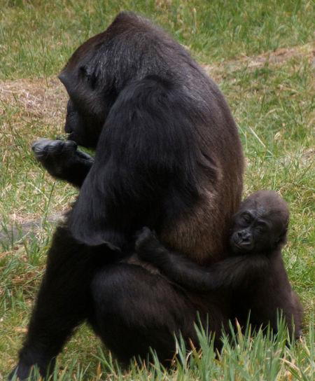 Baby Hug Animal