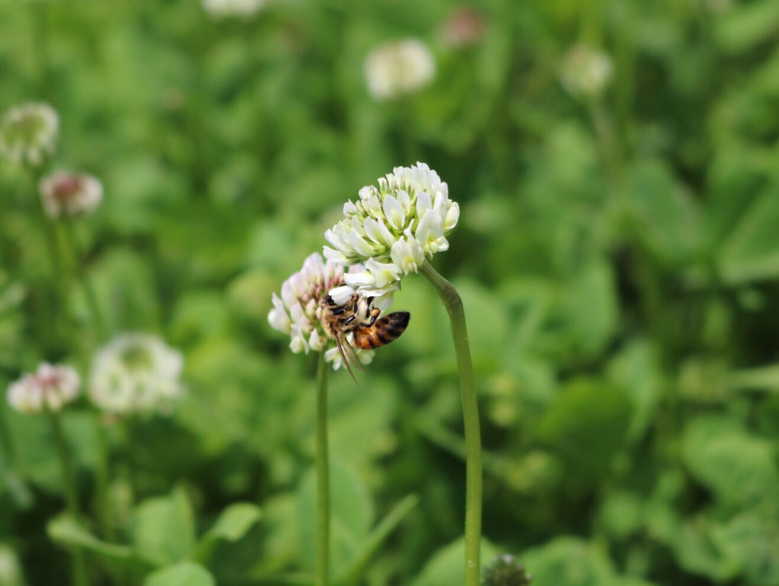 insect, animal themes, animals in the wild, one animal, wildlife, flower, close-up, plant, focus on foreground, fragility, growth, nature, stem, selective focus, freshness, beauty in nature, bee, green color, pollination, outdoors