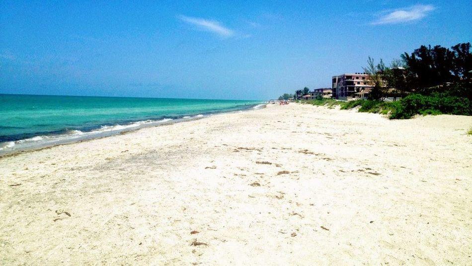 beautiful winter day Water Tree Sea Beach Blue Sand Summer Relaxation Swimming Tourist Resort