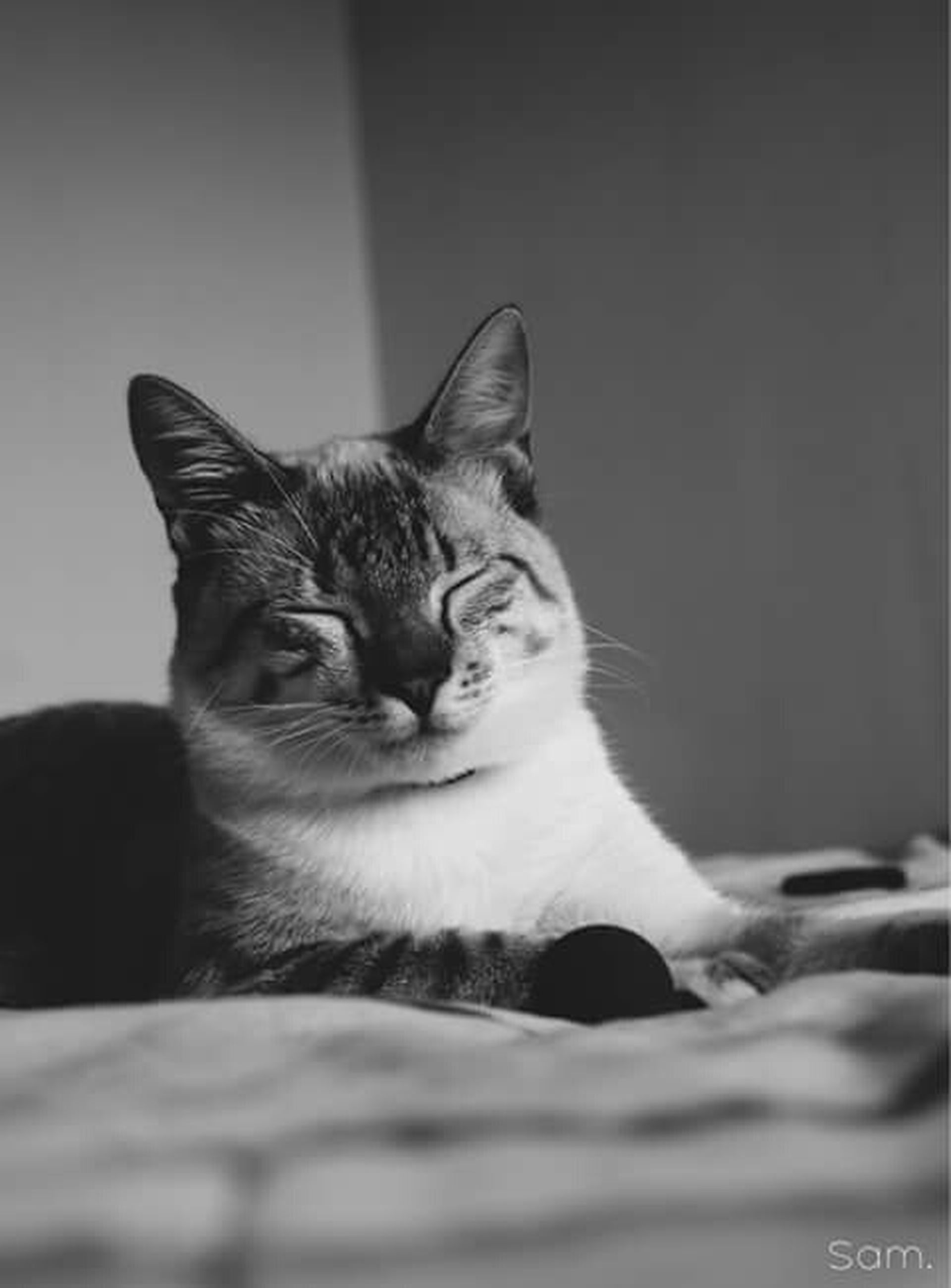 domestic cat, pets, domestic animals, cat, mammal, one animal, animal themes, feline, indoors, whisker, portrait, looking at camera, relaxation, home interior, sitting, close-up, animal head, alertness, lying down