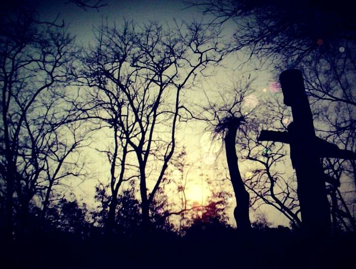 Photo by Nash Nazreen Darkness Silhouette Tree Outdoors Nature Scary Horror In Nature The Week On EyeEm