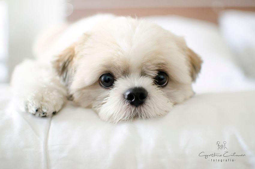 Cynthiazilmanfotografia Fotografialifestyle Fotoemcasa Fotocomamor Fotografadesp Fotografiadepet Pets Pet Photography  Petlifestyle