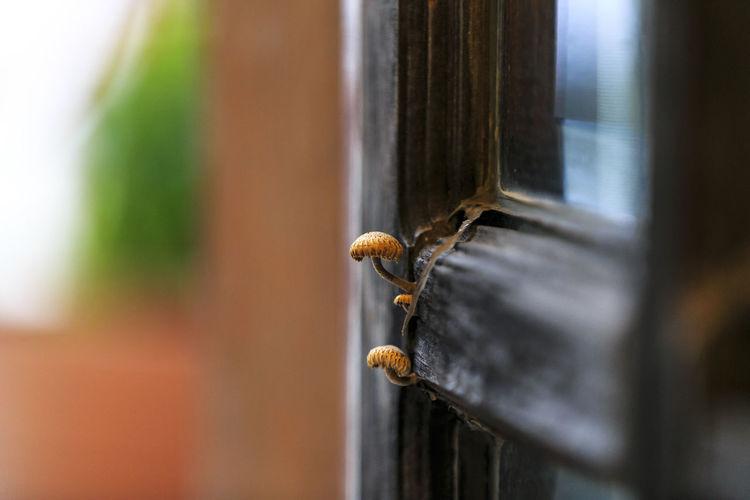 Close-up of lizard on metal door