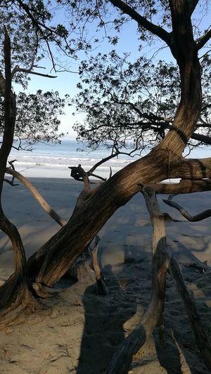 Fgugal Sea Beach Tree