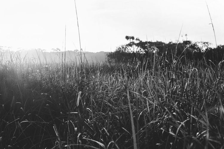 Ponte Vedra Grass Field Nature Tranquility Scenics Beauty In Nature Landscape Sky Sunset Natural Beauty Ponte Vedra Bnw_society Bnw Bnw_collection Bnw_planet