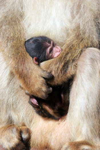 Midsection of monkey holding young animal
