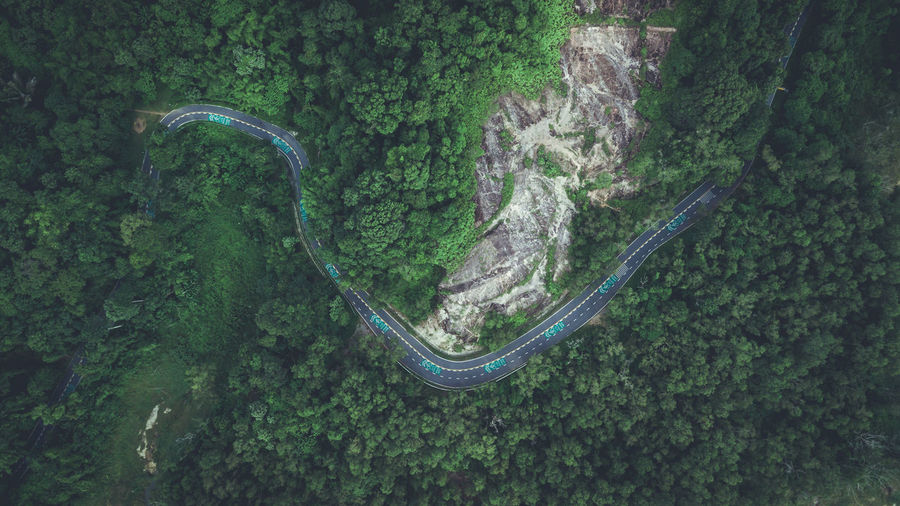 Road in green forest from top view, have bicycle way and rather curve shape