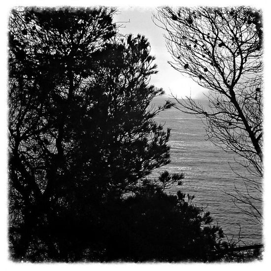 Amanecer en blanco y negro.
