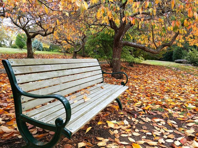 Autumn at the park Autumn colors Followme EyeEm Selects EyeEm Best Shots EyeEmNewHere EyeEm Gallery Nature_collection Naturelovers Nature Photography Australia No People Landscape Sunlight Seat Absence Shadow Park - Man Made Space Close-up Park Bench Leaves Fall Autumn Autumn Collection Park Bench The Great Outdoors - 2018 EyeEm Awards
