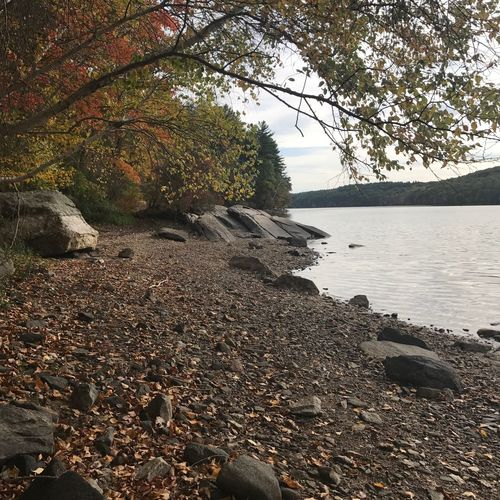 Fall Tree Water Rocks