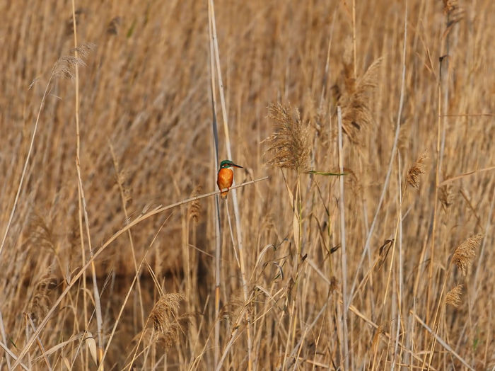 View of a bird in the field