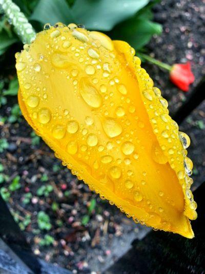 Yellow Water