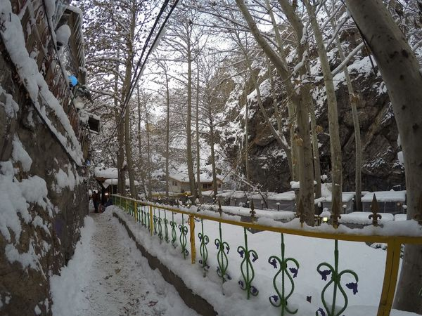 Frozen Iran Tehran Outdoors Tree Snow Winter Cold Temperature Weather Nature Beauty In Nature Darband Iran Nature Iran♥ Tehran, Iran