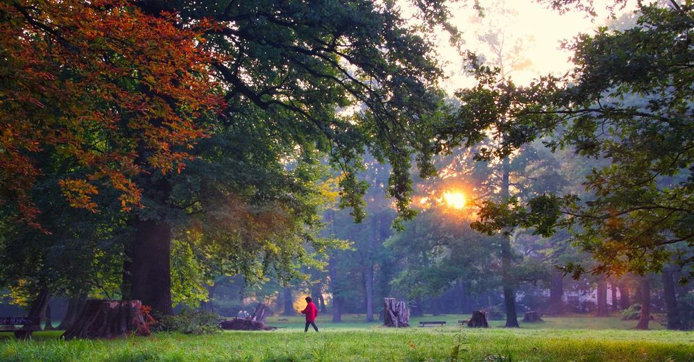 A woman going for a fitness walk on a beautiful late-summer morning Tree Trees Autumn Nature Grass Outdoors Beauty In Nature Tranquility Leaf Change Tranquil Scene Tree Trunk People Day Adult Scenics Park Walking Sports Fitness Fitness Training Rays Dawn Sunrise Morning