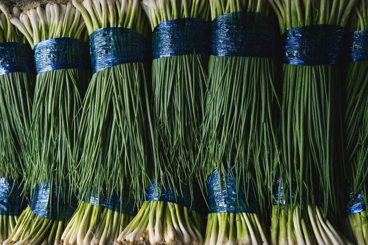 Green onion A7ii Herb Side Dish Close-up Folkways Green Color Green Onion Green Vegetables Onions Vegetable