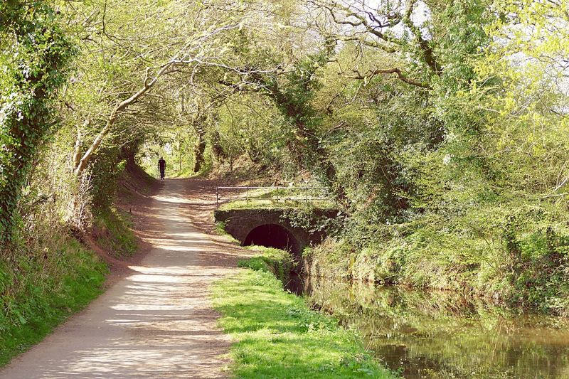 Out for a gentle stroll Check This Out Local Strolling Walk Nature Photography Relaxing Canal Walks Water Tunnel Overhanging Trees Monmouthshire-Brecon Canal Nature Visual Trends SS16 - The Rise of Nature