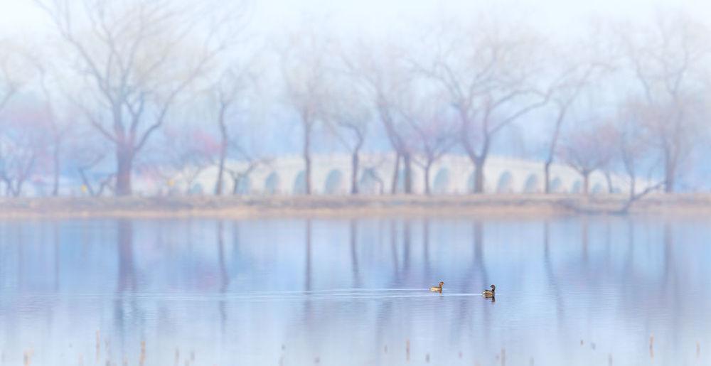 Birds swimming on lake against bare trees