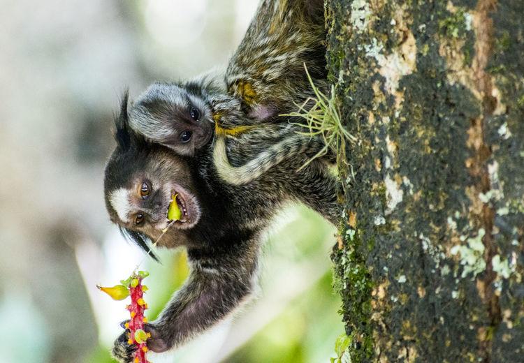 Close-Up Of Monkeys On Tree Trunk