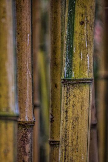 Bamboo Bamboo Forest Groundsforsculpture New Jersey Showcase: February EyeEm Best Shots The Week On Eyem Grounds For Sculpture Nature