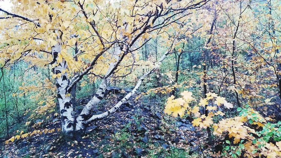 No People Backgrounds Nature Autumn🍁🍁🍁 Nature Photography ExploreNiagaraUSA LiveNiagara Autumn Colors Rain Freshness Livenf City NiagaraFallsUSA
