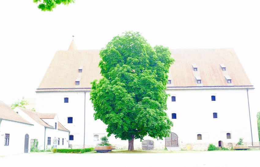 Architecture Architecture_collection Building Green Color Overexposed Overexposure Tree