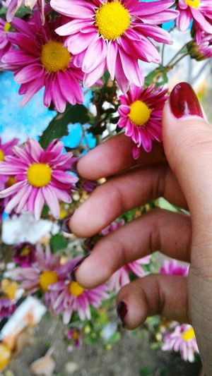 Flower Human Hand Human Body Part Petal Multi Colored One Person Beauty In Nature Fragility Springtime Nature Freshness Outdoors Day Close-up People Flower Head Lifestyles Child Beauty Real People