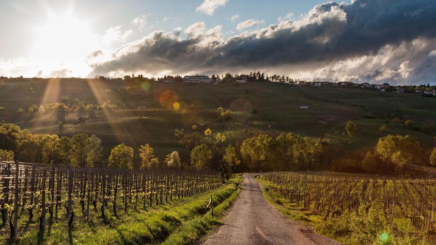Panoramic view of vineyard against sky