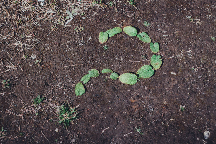 Inquiry Question Questions Question Mark Questions? Graphic Abstract Still Life Simplicity Simple Minimal Minimalism Day Business Finance And Industry Business Contact Why Whynot Ground Backgrounds Header Image Growth Leaf Plant Part Plant Field Green Color Nature Land No People High Angle View Dirt Beginnings Outdoors Beauty In Nature Seedling Tranquility Freshness Directly Above Close-up Small My Best Photo