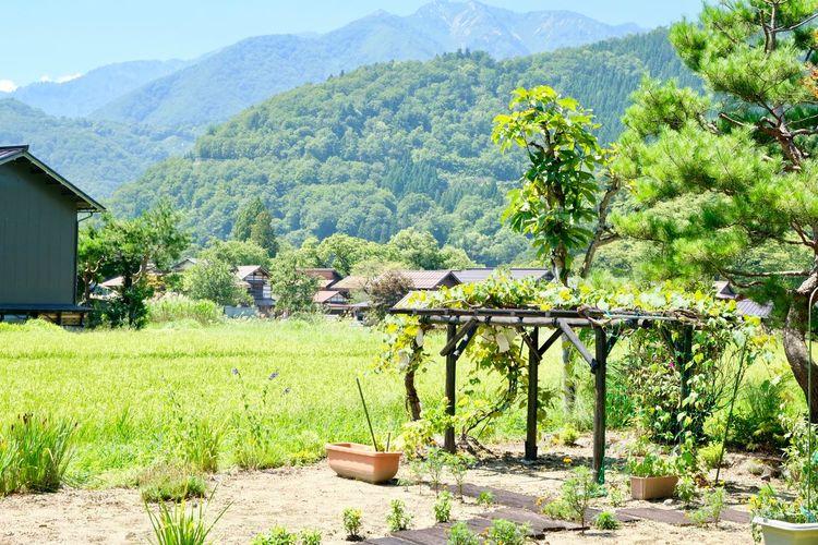View of gassho-zukuri houses in shirakawa-go