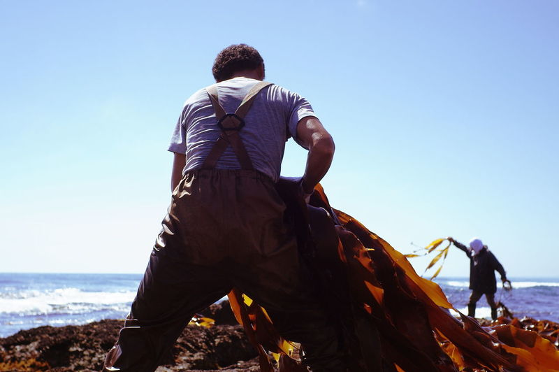Rear view of fishermen holding seaweed at sea shore against clear sky