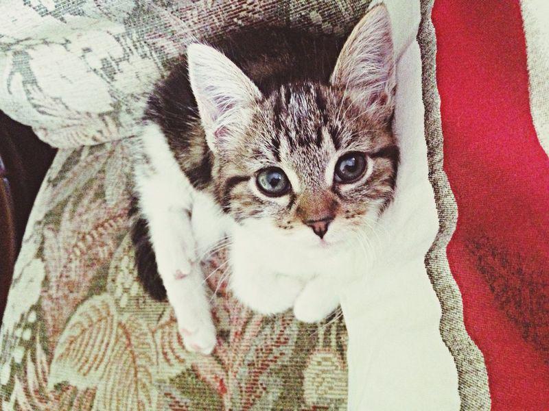 Luffy Cute Pets First Eyeem Photo
