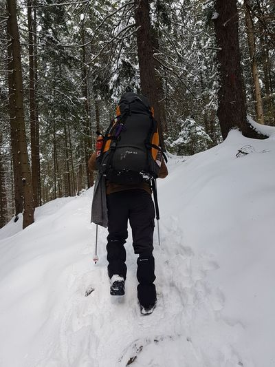 Adventure Backpack Clothing Cold Temperature Forest Full Length Land Leisure Activity Lifestyles Nature One Person Outdoors Plant Real People Rear View Snow Tree Unrecognizable Person Warm Clothing Winter