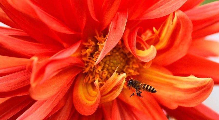 Beauty And The Bee...