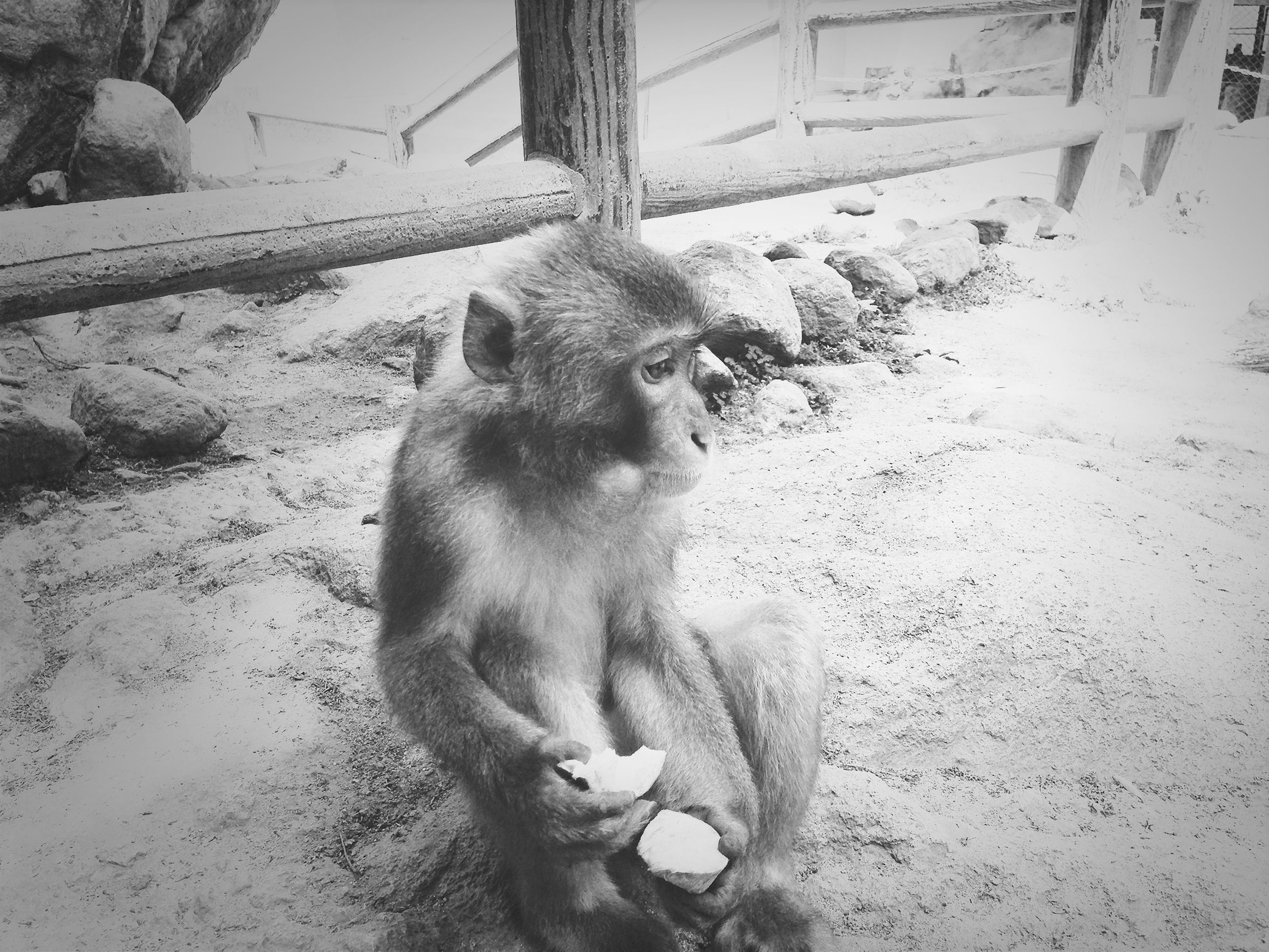 animal themes, one animal, mammal, animals in the wild, wildlife, domestic animals, pets, sitting, full length, zoology, outdoors, day, no people, vertebrate, monkey, high angle view, sunlight, two animals, street, nature