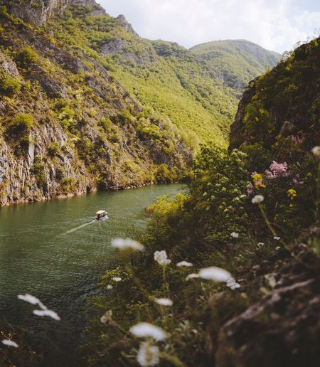 Trip in the Canyon Matka Hike Trip Landscape Flowers Macedonia Matka Matka Canyon Lake Canyon Nature Beauty In Nature Scenics - Nature Tranquility Nature Tranquil Scene Flower Outdoors Landscape Water Environment Day Tree